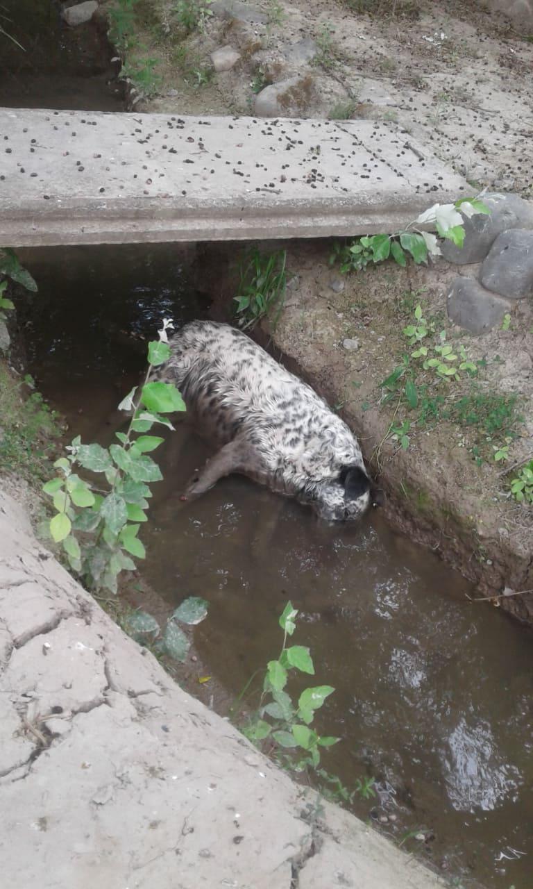 perro muerto San Luis2